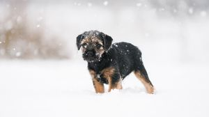 Preview wallpaper puppy, dog, snow, pet