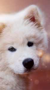 Preview wallpaper puppy, dog, white, fluffy, cute