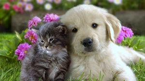 Preview wallpaper puppy, kitten, flowers, grass, muzzle