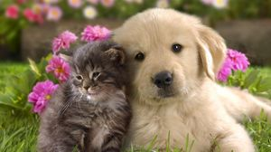 Preview wallpaper puppy, kitten, grass, flowers, couple, friendship