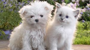 Preview wallpaper puppy, kitten, pair, friendship