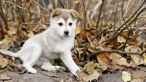 Preview wallpaper puppy, leaves, autumn, playful