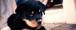 Preview wallpaper puppy, rottweiler, cute, baby