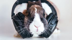 Preview wallpaper rabbit, headphones, music, audio