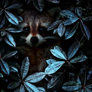 Preview wallpaper raccoon, leaves, disguise