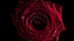 Preview wallpaper red, flowers, macro, rose