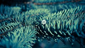 Preview wallpaper ring, diamond, spruce, needles