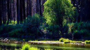 Preview wallpaper river, trees, forest, sunlight, grass
