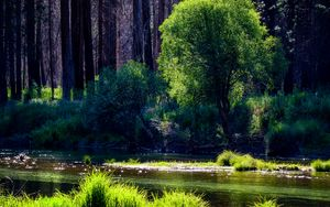 Preview wallpaper river, trees, forest, sunlight, grass