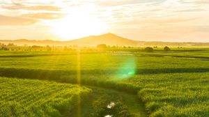 Preview wallpaper road, field, sunlight, bright, glare, landscape