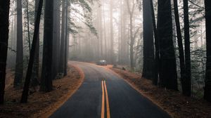 Preview wallpaper road, fog, marking, forest, trees