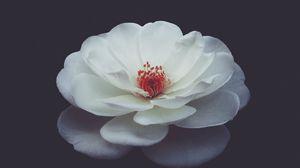 Preview wallpaper rose, bud, petals, black background