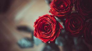 Preview wallpaper rose, bud, red, flower, petals, blur