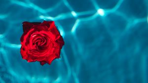Preview Wallpaper Rose Bud Water Red