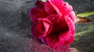 Preview wallpaper rose, drops, pink, flower, close-up