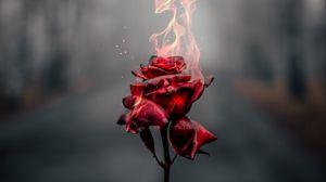 Preview wallpaper rose, flower, fire, flame, burn