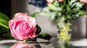 Preview wallpaper rose, flowers, petals, macro, pink