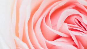 Preview wallpaper rose, pink, flower, petals, closeup