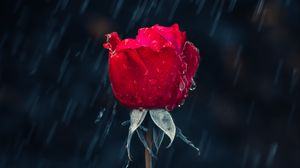 Preview wallpaper rose, rain, drops, moisture, red