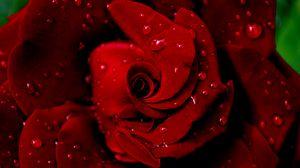 Preview wallpaper rose, red, wet, drops, dew, petals