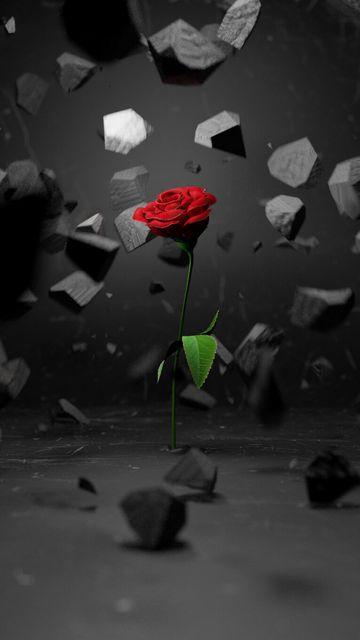 360x640 Wallpaper rose, stones, fragments, flower, red