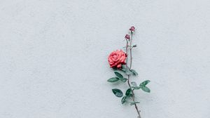 Preview wallpaper rose, wall, minimalism, branch, bush, bud