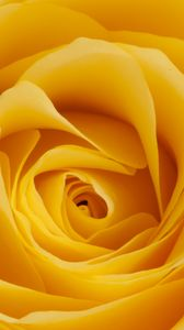 Preview wallpaper rose, yellow, bud, petals, macro