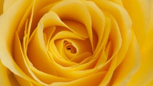 Preview wallpaper rose, yellow, bud, petals, macro