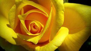 Preview wallpaper rose, yellow, bud, petals