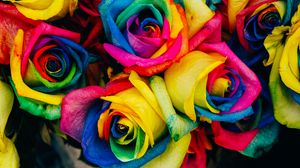 Preview wallpaper roses, colorful, rainbow