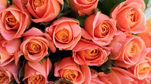 Preview wallpaper roses, flowers, bouquet, pink, coral, present, romantic
