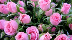 Preview wallpaper roses, flowers, bouquet, delicate, buds