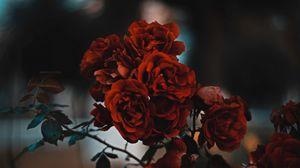 Preview wallpaper roses, red, bush, blur, scarlet