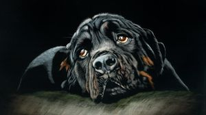 Preview wallpaper rottweiler, dog, black, art