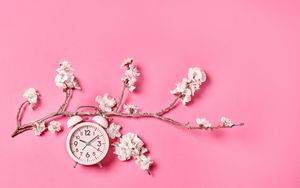 Preview wallpaper sakura, flowers, clock, alarm clock, minimalism, pink