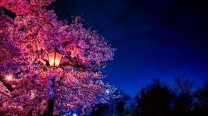 Preview wallpaper sakura, flowers, lantern, blooms, evening, spring