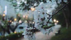 Preview wallpaper sakura, flowers, petals, spring, macro, twilight