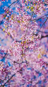 Preview wallpaper sakura, flowers, pink, branches