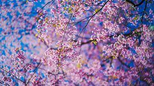 Preview wallpaper sakura, flowers, pink, branches