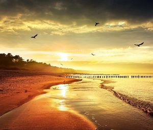 Preview wallpaper sea, beach, nature, birds, light