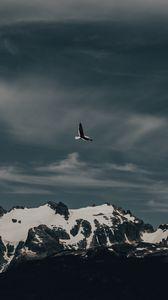Preview wallpaper seagull, bird, flight, mountain, nature
