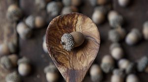 Preview wallpaper acorn, nut, spoon, brown, macro