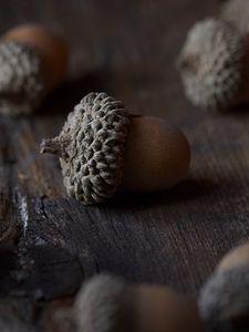 Preview wallpaper acorn, nut, macro, brown