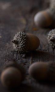 Preview wallpaper acorns, macro, brown