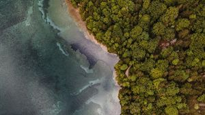 Preview wallpaper aerial view, coast, trees, forest, sea