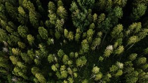 Preview wallpaper aerial view, road, trees, forest