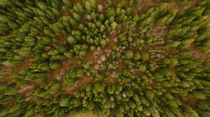 Preview wallpaper aerial view, trees, forest