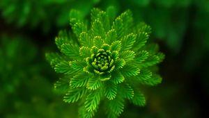 Preview wallpaper algae, plant, macro, close-up