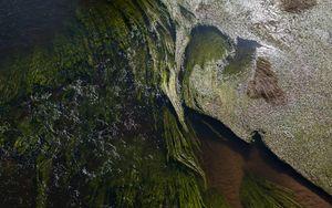 Preview wallpaper algae, water, glare, waves, wavy