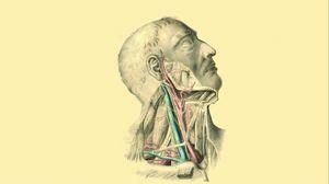 Preview wallpaper anatomy, veins, arteries, muscles